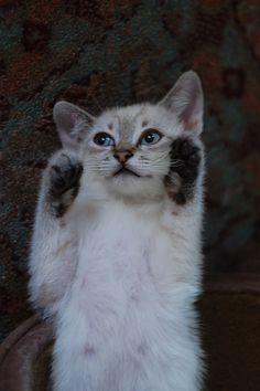 put up yer dukes #kittens