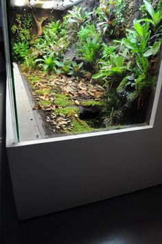 Leopard Gecko Terrarium, Snake Terrarium, Orchid Terrarium, Reptile House, Reptile Room, Crested Gecko Habitat, Snake Cages, Frog Tank, Forest Habitat