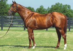 Pure Prize(1998)Storm Cat- Heavenly Prize By Seeking The Gold. 3x4 To Northern Dancer, 5x5 To Native Dancer And Bull Page. 17 Starts 5 Wins 5 Seconds 2 Thirds. $475,459. Won 2002 Kentucky Cup Classic (G2), 3rd Fourstardave H(G3).