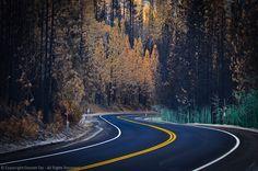 Yosemite, Hwy 120, Rim Fire, Burned Trees, Hydroseed