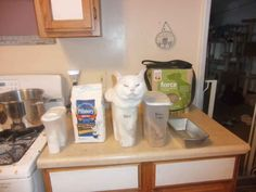 35 Cats Who Prove That No Place Is The Wrong Place For A Cat - BlazePress