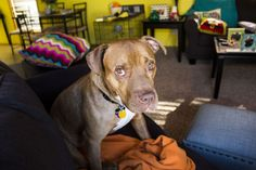 Snyder: Breed-specific laws cause injustice