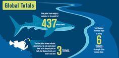 Ocean Conservancy: 2016 #Ocean Trash Index Infographic
