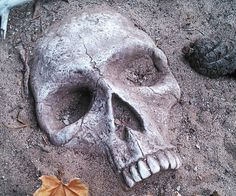 Put a stop to the endless solicitors and Jehovah's witnesses knocking at your door when you strategically place a few buried skull garden decorations along your front yard. They comesexpertly designed to look just like a real human skull, making it ideal for pranks.