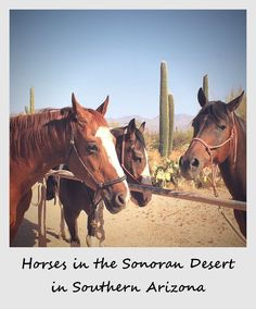 Polaroid of the week: Horses in the Sonoran desert in Southern Arizona