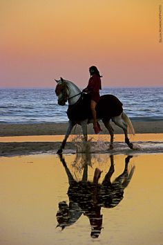 Horseback riding by the sea. Love the reflection on this one, it is just lovely. Also it isn't all sun and blinding light like a lot of equine beach photos. Pretty Horses, Horse Love, Beautiful Horses, Animals Beautiful, Cute Animals, Clydesdale, Cavalo Wallpaper, Horse Photography, Horseback Riding