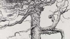 Ian Westacott's venerable trees