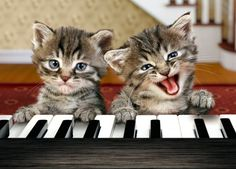 "Kittens:  ♩♬  ""Ebony and ivory live together in perfect harmony; side by side on my piano keyboard: Oh Lord, why don't we...""  ♪ ♫"
