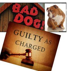 Bad Dogs, Bad Dogs, Whatcha Gonna Do? (VIDEOS) ... #pets #animals ... PetsLady.com | via @roncallari