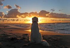Dog enjoys a beautiful sunset. Photo by: Ingrid Brandt