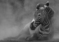 Amazing Wild Life Photography