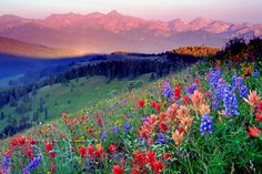 Shrine Ridge near Vail, Colorado Hiked this a few years back and this picture is truly what it looks like up there, I have never seen so many wild flowers as I have Up there. Colorado Springs, Vail Colorado, Colorado Mountains, Rocky Mountains, Monte Rainier, Alberta Canada, Colorado Wildflowers, Belle Photo, Beautiful Landscapes
