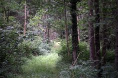 'But there is no road through the woods' #nature - http://anenglishwood.com/?p=9865