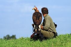 Czech-Falconry-Birds-Hunting-Bohemian-Photo-43