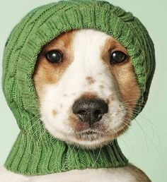 Keep your ears warm this weekend . Pets have sensitive ears just like us humans in winter    #weekend #petsofsydney #petsofmelbourne #cutepooch #winterfun #weekendfun #adventuredogs #organic_bone