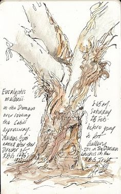 Sketching in Nature: Eucalyptus - Alissa Duke. Nature, journal, sketchbook, notebook, dairy, words and images, drawing.