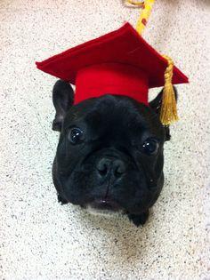 88 Best Dogs Graduation Day Images Basset Hound Bassett Hound