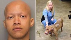 Full prosecution for Georgia man that set dog on fire! | YouSignAnimals.org