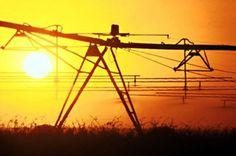 Convocadas en Andalucía las bonificaciones a las pólizas de seguros agrarios contratadas en 2015