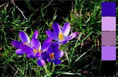 Wiosenne palety kolorów