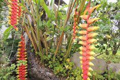Jardim de Beira Mar: O Que Plantar - Espécies, Cultivo, Paisagismo