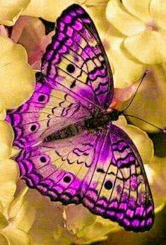 Butterfly Drawing, Butterfly Painting, Butterfly Wallpaper, Butterfly Kisses, Butterfly Flowers, Butterfly Wings, Types Of Butterflies, Flying Flowers, Most Beautiful Butterfly