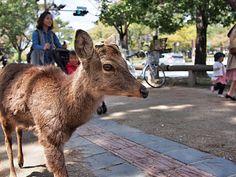 Kyoto Nara Park