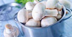Žampiony jsou chutné a mezi houbaři i velmi oblíbené houby. Jenže i mezi žampiony najdete takový, po kterém můžete s otravou skončit v…