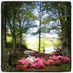 Newnan, Georgia in the spring.