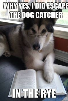 why yes i did escape the dog catcher in the rye - Condescending Literary Pun Dog