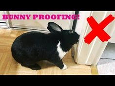 Diy Bitter Apple Spray For Rabbits - Diy Bunny Cage, Diy Bunny Toys, Bunny Cages, Rabbit Litter Box, Rabbit Toys, Pet Rabbit, Flemish Giant Rabbit, Bunny Supplies, French Lop