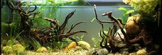 Tuto déco : aquascaping styles - Biotope Aquascaping Style