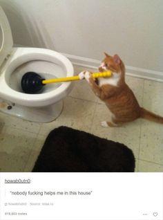10 publicações sobre gatos que vão te fazer rir