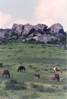 Wild ponies on Grayson Highlands, VA. Photographed by Sarah Ives.