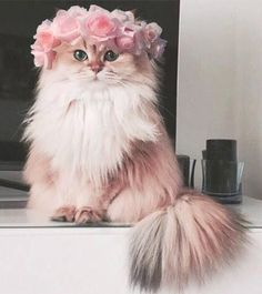 fluffy kittens Umbridge came back as a pink fluffy cat. Cute Baby Cats, Cute Little Animals, Cute Cats And Kittens, Cute Funny Animals, Kittens Cutest, Pretty Cats, Beautiful Cats, Animals Beautiful, Cute Cat Wallpaper