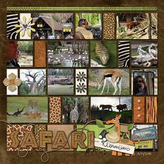 We loved the safari and have LOTS of pics to prove it...wondering how to corral all of them into just a few pages.