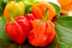 Organic Orange Habanero Chile Pepper Heirloom by nimblenitecap, $2.00