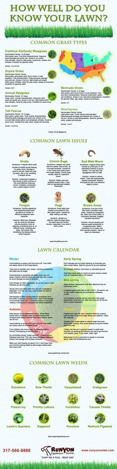 Proper lawn care and maintenance is a primary concern for many homeowners so if you are among these this infographic should shed light into the fundamentals of lawncare. Explore what type of gras... #howtobuildashed