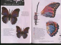 Бабочки. Большие сканы