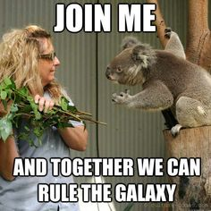 The force is strong with this koala.