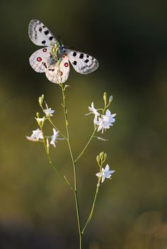 Beautiful and Fragile Butterfly