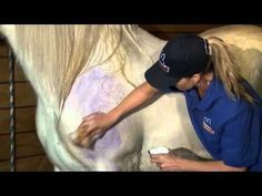 Whitening & Brightening Shampoo for Horses: How to use Mane 'n Tail Spray 'n White