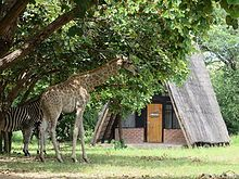 Kuti Wildlife Reserve is home to a variety of flora and fauna native to Malawi. A perfect bush retreat in the heart of Malawi! Flora And Fauna, Campsite, Lodges, Giraffe, Wildlife, Africa, Places, Animals, Camping
