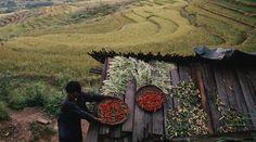 #Buthan e #montagne #bio