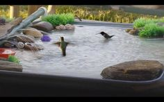 Learn how to create a beautiful DIY bird bath with this stepbystep pictorial tutorial All you will need is an oil pan PVC pipe pump and plastic tub filled with water Post. Humming Bird Bath, Hummingbird Bird Bath, Humming Bird Feeders, Hummingbird Nectar, Bird Bath Fountain, Bird Bath Garden, Diy Bird Bath, Balcony Garden, Homemade Bird Baths