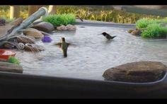 DIY Bird Bath Humming Bird Bath, Hummingbird Bird Bath, Humming Bird Feeders, Hummingbird Nectar, Diy Bird Bath, Bird Bath Garden, Balcony Garden, Homemade Bird Baths, Moon Garden