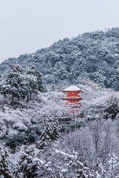 plasmatics-life:  Snow in Kyoto | Red in white | Japan  by Takk B