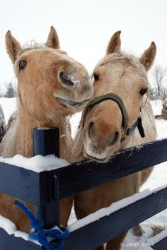I once kissed a horse and left my lipstick stain on his forehead-ha!  I love horses and donkeys, and every animal.  ❥-Mari Marxuach Parrilla ...Photograph at BetterPhoto.com