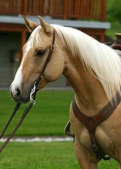 That's cute! western pony:) this is actually a pretty palamino