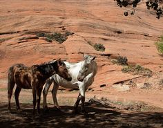 Wild Canyon Horses Photo Art Print by Julie Magers Soulen Beautiful Creatures, Animals Beautiful, Beautiful Things, Cute Animals, Cowgirl And Horse, Horse Love, Wild Animals Photos, Orange Wall Art, Horse Photos